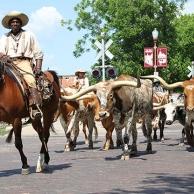 Fort Worth, la ciudad donde aún hay vaqueros …