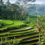 Bali, a piece of paradise on an island in Indonesia