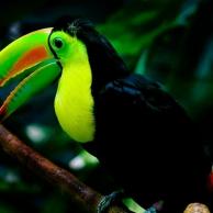 Belice, una enorme reserva natural en el centro de América