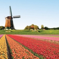 A surprising drive in the Netherlands