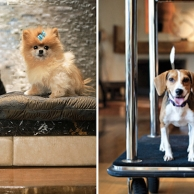 Discover 6 hotels to travel with your pet (Part II)