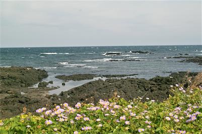 то летище на остров Jeju Коли под наем